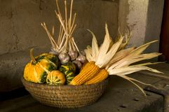 Basket full of Harvest still life. Photography shows a wicker basket full of harvest such as little pumpkins, garlic and corn placed on an old dusty table Stock Photography