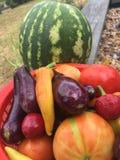 Basket full of harvest vegetables from the garden Stock Images