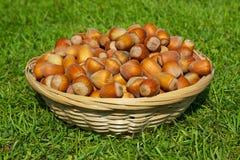 Basket full of hazelnuts Royalty Free Stock Photo