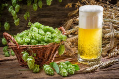Basket full of hops and a cold beer Royalty Free Stock Images