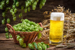 Basket full of hops and a cold beer Royalty Free Stock Photo