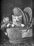 Basket full of kittens, pets for the children stock illustration