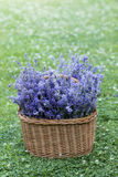 Basket full of lavender Stock Photos
