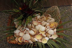 Basket full of leaves and shells Stock Images