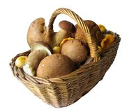 Basket full of mushrooms Stock Photos