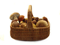 Basket full of mushrooms. Isolated image Royalty Free Stock Photography