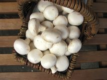 Basket full of mushrooms Stock Photo