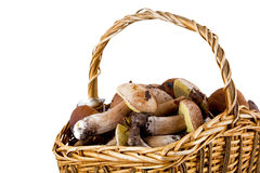 Basket full of mushrooms Stock Images