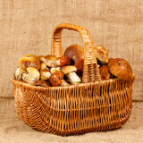 Basket full of mushrooms Royalty Free Stock Photography