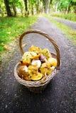 Basket full of mushrooms. Autumn season mushrooming. Stock Photo