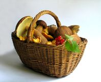 Basket full of mushrooms and berries Royalty Free Stock Photo