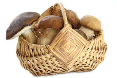 Basket full of mushrooms Stock Photography