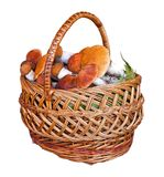 Basket full of mushrooms on a white background Stock Image