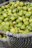 Basket full with Must Pears Royalty Free Stock Images