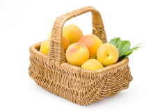 Free Basket Full Of Apricots Royalty Free Stock Photo - 11122925