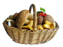 Basket Full Of Mushrooms Stock Image