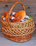Basket Full Of Mushrooms On A Wooden Background Royalty Free Stock Image