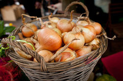 Basket full of onions. Rustic basket full of ripe onions at local market Stock Image
