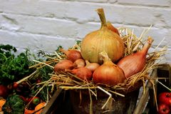 A basket full of Onions. Of various sizes laid out on a bed of straw surrounded by various fruit and vegetables Stock Photography
