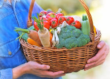 Basket full of organic vegetables Royalty Free Stock Photo