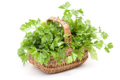 Basket full of parsley Stock Image