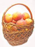 Basket full of peaches fruit Royalty Free Stock Photo