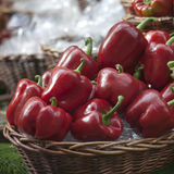 basket full of peppers for sale on a Borough market stall stand Royalty Free Stock Photos