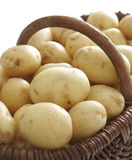 Basket full of potatoes Royalty Free Stock Images
