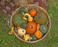 Basket full with Pumpkins Stock Photo