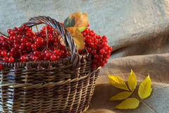The harvest of berries. Basket full of red berries  on a grey background Royalty Free Stock Photos