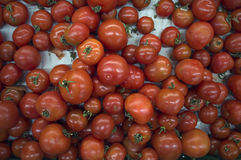 Basket full of red ripe tomatoes Royalty Free Stock Image