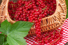 Basket full of redcurrant with green leaf Stock Photos