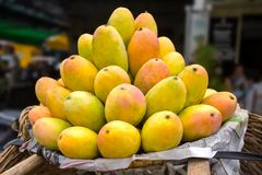 Basket full of ripe mangoes Royalty Free Stock Photography