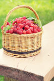 Basket full of ripe raspberry on the painted wooden bench Stock Images