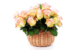 Basket full of roses Royalty Free Stock Photo