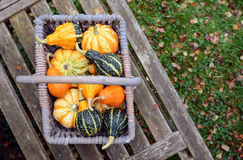 Basket full of small ornamental pumpkins on a bench Royalty Free Stock Photography