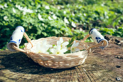 Basket full of spring flowers Royalty Free Stock Photography