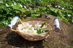 Basket full of spring flowers Royalty Free Stock Image