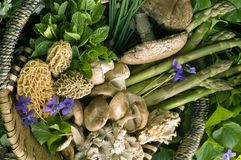 Basket Full of Spring Mushrooms. Basket full of mushrooms, vegetables, herbs, and edible flowers foraged for in the countryside in the early spring Royalty Free Stock Photo