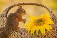 Basket full of sunshine Royalty Free Stock Photography