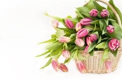 Basket full of tulip Royalty Free Stock Photo