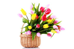 Basket full of tulips Royalty Free Stock Image