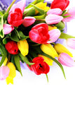 Basket full of tulips Stock Photo