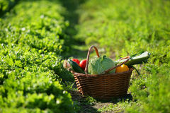 Basket full of vegetables Stock Photos