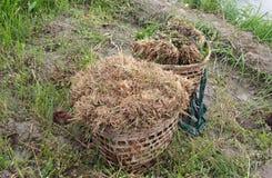 Basket full of vegetables Stock Photos