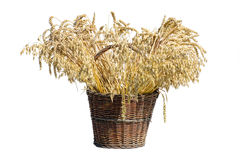 Basket full of wheet Stock Photos