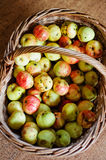 Basket full of wild apples Stock Photo