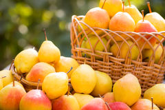 Basket full of yellow juicy pears Royalty Free Stock Photos