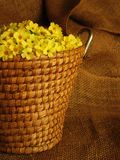 Basket full of yellow primrose blossoms. Spring harvest for herbal tee - primrose blossoms in a basket Stock Photo