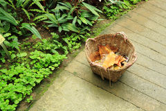Basket in garden Stock Photos